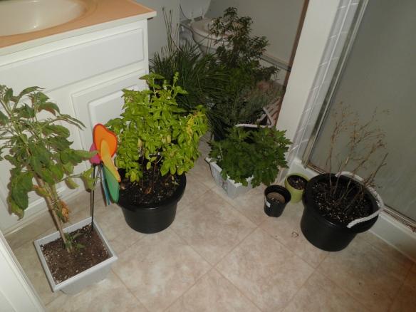 bathroom greenhouse